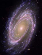 Spiral Galaxy M81